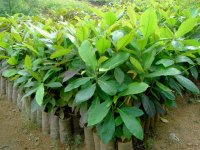 Material for agroforestry research in Peru
