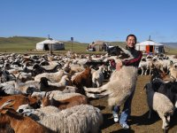Our animal production project in Mongolia