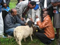 Improvement of veterinary services in Ethiopia